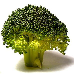 594px-Broccolli_doesnt_grow_on_trees,_you_know